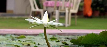 Jai Niwas Lotus Bloom